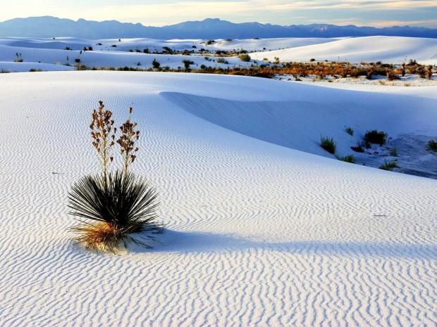 Manantiales y dunas de yeso en Cuatrociénegas, Coahuila