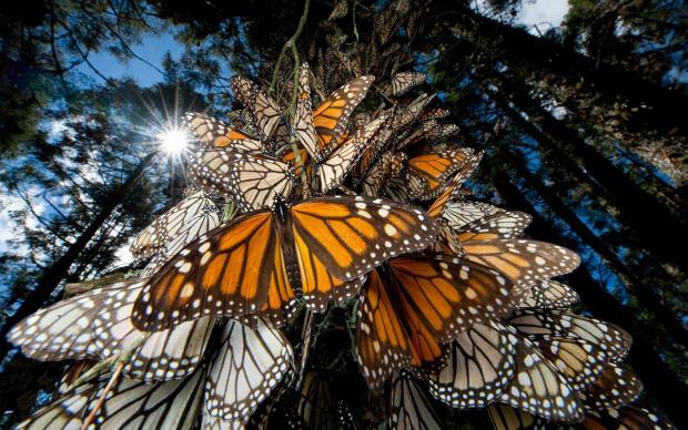 Reserva de la Biósfera de la Mariposa Monarca en Michoacán